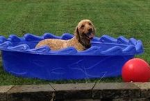 Summer Care / Summertime can present some unique challenges for pet owners - including heat, pests, and water. This board is a collection of tips and information to keep your pet cool, safe and entertained!