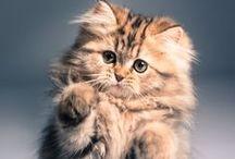 Fluffy kittens / Kittens!