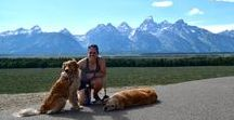 Dog Friendly Travel / Have you ever wanted to bring your dog along with you on vacation? Follow this board for tips on traveling with your pet from places to go, things to do and places to stay!