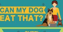 Dog Infographics / All the things you've ever wanted to know about dogs - presented in unique and interesting ways!