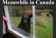 Canada / by Alessia Ricci.