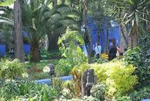 In Frida's Garden / Patio settings and plants that Frida Kahlo loved or would have loved.
