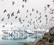Polarområdene