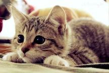 Katzen / cats / Süße Katzen anderer Leute / Cute cats of other people - Besuche meine Katzen-Seite: http://katzentipps24.de