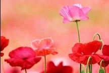 Blumen / flowers / Wunderschöne Fotos von Blumen