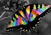 """Bountiful Butterflies / """"May the wings of the butterfly kiss the sun and find your shoulder to light on, to bring you luck, happiness and riches. Today, tomorrow and beyond"""". ~ Irish Blessing / by Steve Lewis"""