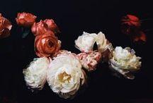 {beautiful blooms}