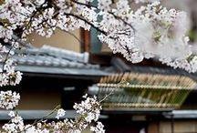 Japan / by Annette Jones