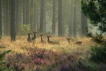 Animals / by Margaret Byars