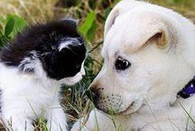 dog & cat / by AnaS