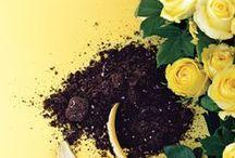 """""""Gradina"""" / plante, flori, gradini"""