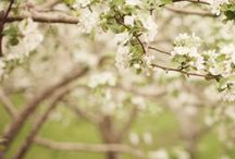 Spring / Hello spring.