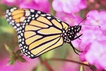 Gardening for Bees, Birds, and Butterlies / A collection of handy links, tutorials, instructions, ideas, and inspiration to help you plan, grow, and nuture a garden environment that supports beneficial bees, birds, butterflies, and more.