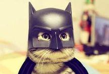 International Cats' Day / Les plus beaux chats geek pour fêter la journée internationale des chats