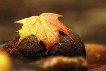 Fall / Crunching leaves.  Crisp air.  Warm hearts.