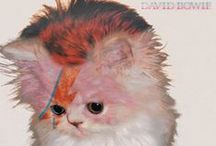 thekittencovers.tumblr.com