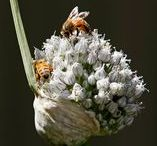 Garden/Nature Photos - Insects