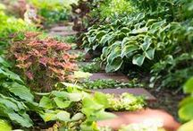 Garden Design - Shade / A collection of handy links, infographics, tutorials,DIYs, freebies, instructions, ideas, and inspiration to help plan and design your dream garden.
