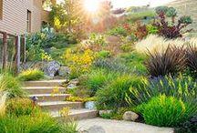 Garden Design - Sun / A collection of handy links, infographics, tutorials,DIYs, freebies, instructions, ideas, and inspiration to help plan and design your dream garden.