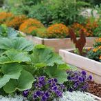 Garden Design - Edibles / A collection of handy links, infographics, tutorials,DIYs, freebies, instructions, ideas, and inspiration to help plan and design your dream garden.