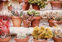 terrasse / jardin / fleurs