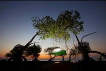 Stingray Tree Tent / The Tentsile Stingray is a three person tree tent which provides unbeatable comfort, shelter and protection whilst being suspended in mid-air!