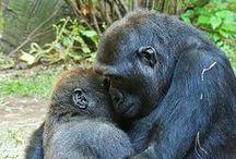 Bébés animaux / Babies animals / Si attendrissants