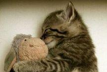 Cats / Tous différents et si mignons