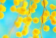 Flowers / fargespill og former