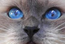 Cat pictures / Cat, photos and videos,