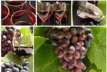 Best Wine of Apulia and Basilicata / Best Italian Wines http://www.terrevicine.com/categoria/vini