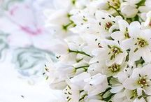 Plantes sauvages comestibles / Wild edible plants / Des herbes, des fleurs, des graines sauvages et comestibles.