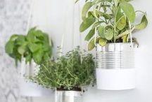 Garden ideas / Des idées pour créer ou améliorer son jardin.