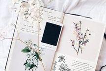 Herbier / Des fleurs, des feuilles, des plantes ... joliment conservées.