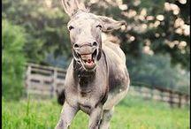zabawne/funny / by Beata Anna G