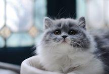 cat ☜