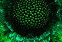 *~ Green envy ~*