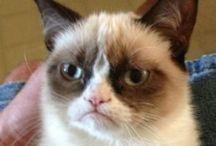 *~ Grumpy cat rocks ~*