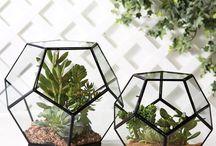 plants ☜