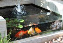 aquarium ☜