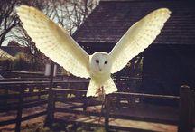 birds  ☜