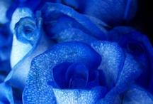 Tudo azul!