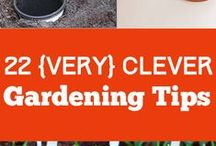 Gardening tips / by Donna Donna