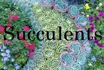 Succulents / Drought tolerant succulents for inside or outside homes. Cute and pretty succulents that will help save the earth from droughts!