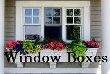 San Francisco Window Boxes / Innovative and drought tolerant San Francisco window boxes, succulents, ornamental grasses.