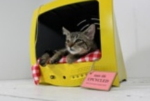 Pet~Friendly! / Eco-friendly, handmade and upcycled pet (& pet lover) products, tips, funny pics and more!