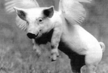 Our Mascot!  The Flying Pig! / by Fidelity On Call, Ltd