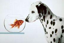 Dalmatian Love  / by Mary Zeman