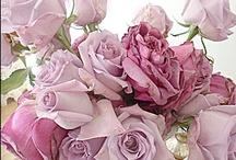 Roses*Queen of Flowers / by ♛carol jensen