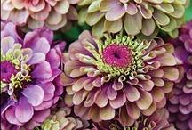 *Fleurs*Fabulous / by ♛carol jensen